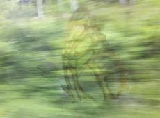 Großer Falter mit Grün