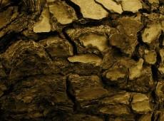 Bruch Aquitaine Borken