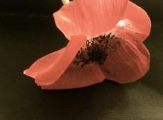 Liegende Blüte