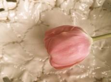 Tulpe auf Porzellan