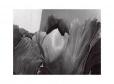 Tulpen, Relief
