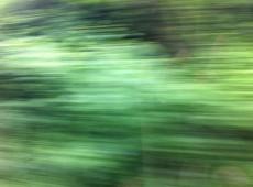 Grüner Juni 3 Bambösch