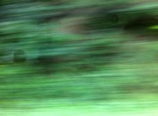 Grüner Juni 5 Bambösch