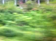 Grüner Juni Minette