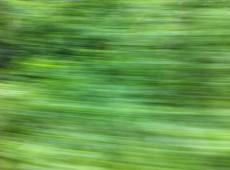 Grüner Juni pur